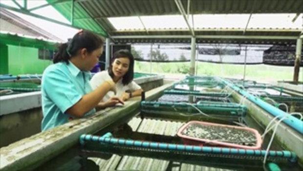 กบนอกกะลา : ปลาตัวน้อย ขวัญใจมหาชน ช่วงที่ 3/4 (20 พ.ค.59)