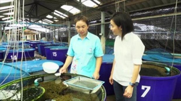 กบนอกกะลา : ปลาตัวน้อย ขวัญใจมหาชน ช่วงที่ 4/4 (20 พ.ค.59)