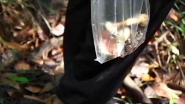 คนค้นฅน : กบ อนุรักษ์ เด็กหนุ่มนอกกะลา ช่วงที่ 4/4 (14 มิ.ย.59)
