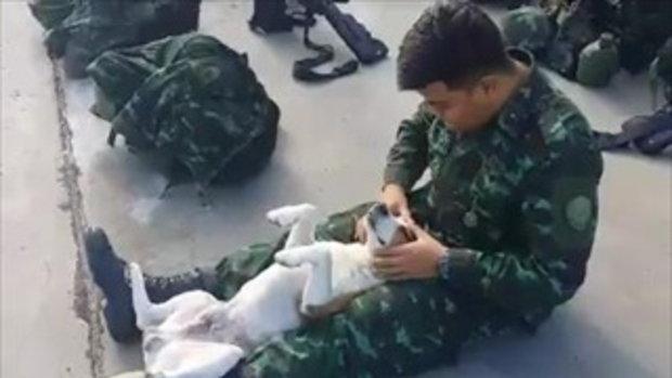 ทหารนวดทำสปาให้น้องหมา