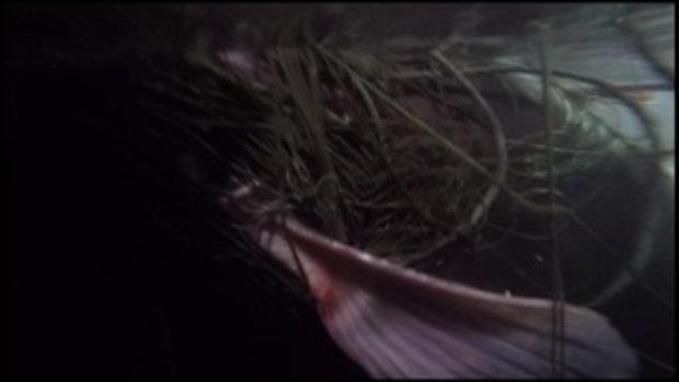 คนมันส์พันธุ์อาสา : ภารกิจช่วยชีวิตแม่ปลาเขื่อนเขาแหลม ช่วงที่ 3/4 (9 ก.ค.59)