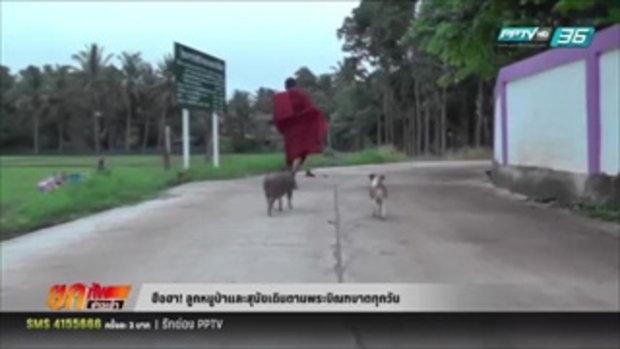 ฮือฮา! ลูกหมูป่าและสุนัขเดินตามพระบิณฑบาตทุกวัน