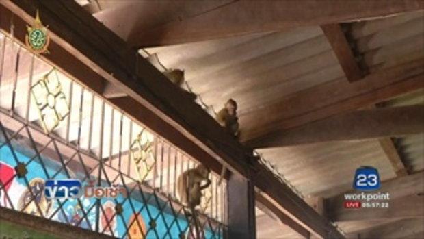 แก้ปัญหาลิงฉีกรายชื่อประชามติ l ข่าวมื้อเช้า l 26 ก.ค.59