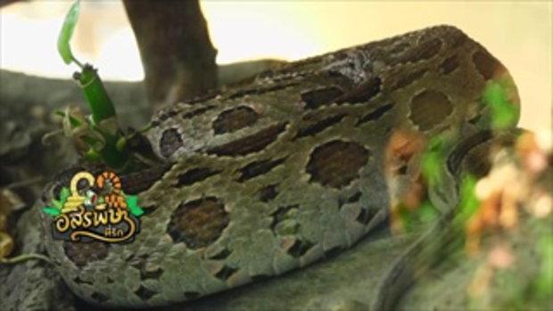 กบนอกกะลา : งู อสรพิษที่รัก (1) ช่วงที่ 1/4 (15 ก.ค.59)