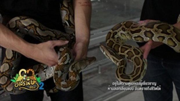 กบนอกกะลา : งู อสรพิษที่รัก (2) ช่วงที่ 2/4 (22 ก.ค.59)