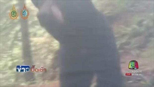 หนุ่มแคนาดาทำสมาธิ ขณะหมีดำบุกเต็นท์กลางป่า l ข่าวมื้อเช้า l 16.ส.ค.59