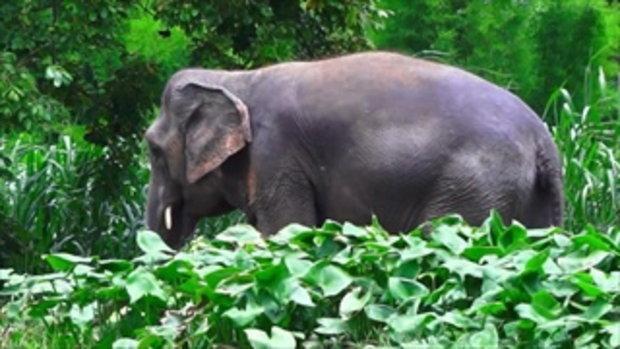 คนมันส์พันธุ์อาสา : ภารกิจปลูกพืชอาหารและสร้างป่าให้ช้าง จ.สุรินทร์ ช่วงที่ 3/4 (13 ส.ค.59)