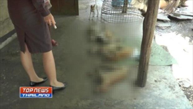 2 วัน 11 ตัว! คนใจบาปวางยาลูกสุนัขวัย 2 เดือน ตาย 11 ตัว ภายใน 2 วัน
