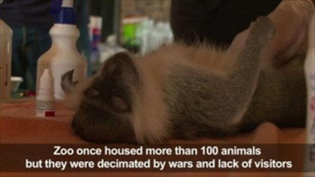 กลุ่มการกุศลช่วยอพยพสัตว์ออกจากสวนสัตว์กาซา