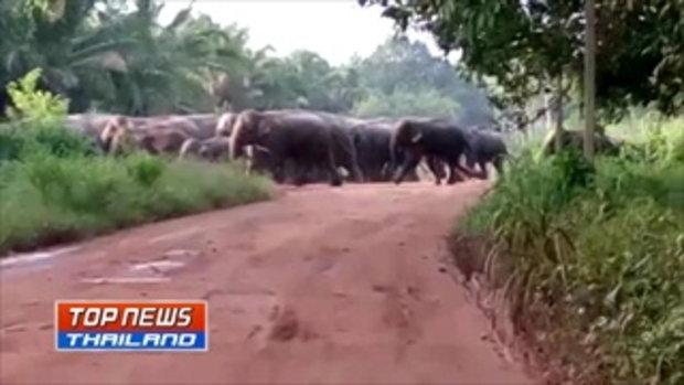 ชาวบ้านผวา! ไม่กล้าออกไปกรีดยาง หลังมีช้างป่ากว่า 50 ตัว ออกหากินในเขตพื้นที่ชุมชน