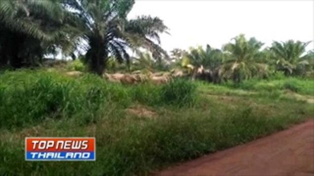 ช้างป่าเครียดถูกจุดไฟและยิงปืนไล่ วิ่งเหยียบชาวบ้าน และรถจักรยานยนต์จนพังเสียหาย