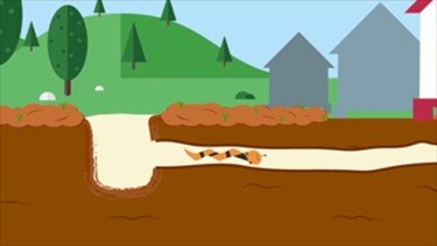 คลิปอ๊อด อ๊อด : พฤติกรรมของงู เป็นอย่างไร