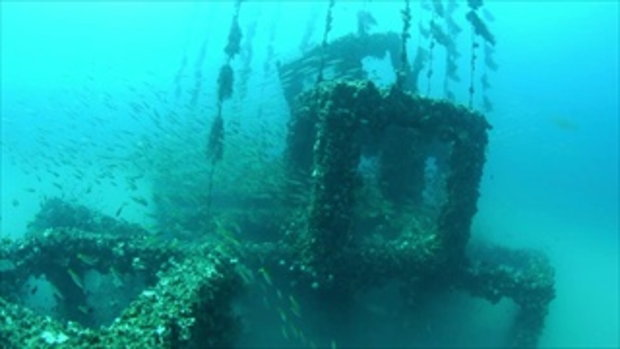 กบนอกกะลา : ปะการังเทียม นิเวศใหม่ใต้ทะเล (1) ช่วงที่ 2/4 (19 ส.ค.59)