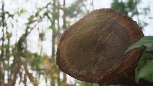 คลิปอ๊อด อ๊อด : การเลือกไม้ที่เหมาะสมสำหรับบ้านเรือนไทย