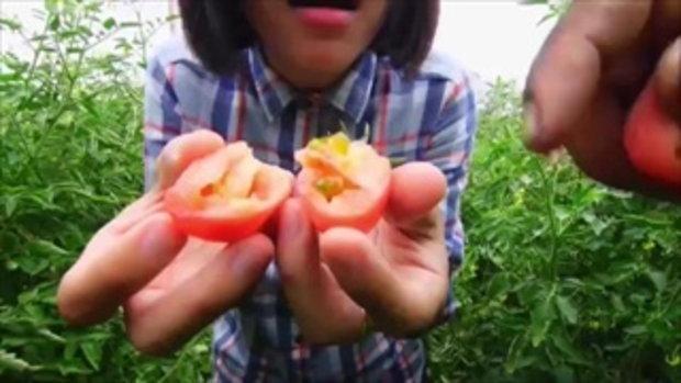 กบนอกกะลา - ส้มตำปาปาย่า ป็อกป็อก ช่วงที่ 1/4 (15 ก.ย.59)
