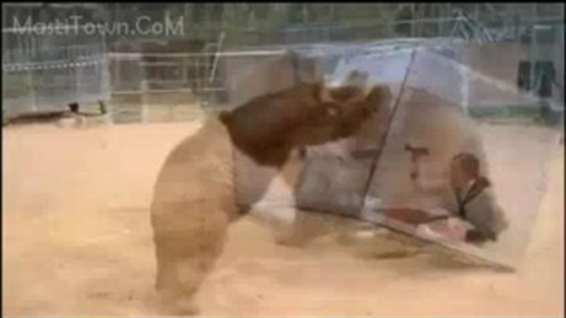 Girl inside a box vs Big Wild Bear Danger