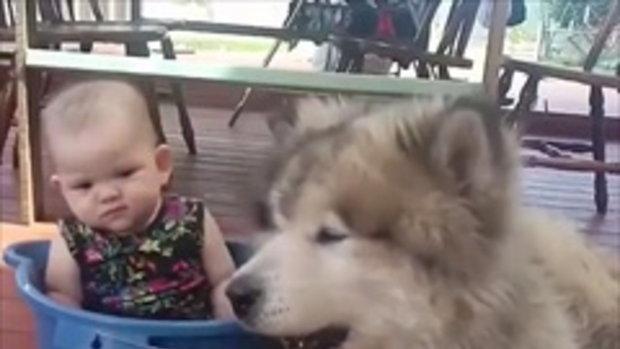 เจ้าหมาตัวใหญ่ หรือเจ้าหนูตัวน้อยกันเนี่ย น่ารักสุดๆ !!