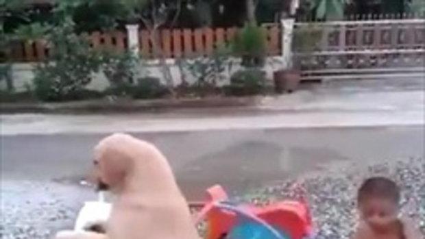 น่ารัก มีหมาเป็นเพื่อน ดีกว่ามีเล่นคนเดียว ยอมมันเลย!!