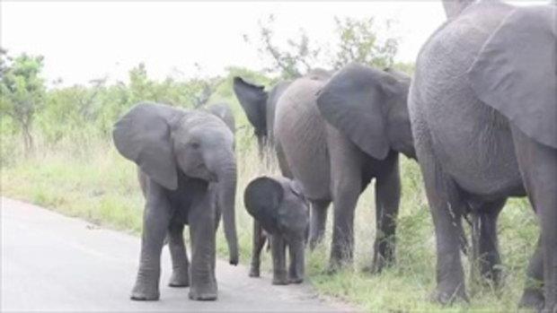 น่ารัก ลูกช้าง สงสัยว่างวงของมันคืออะไร