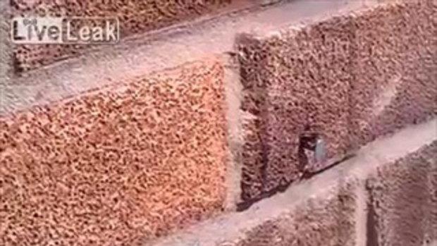 คลิปสุดทึ่ง ผึ้งแค่ตัวเดียวถอนตะปูออกจากกำแพงอิฐได้