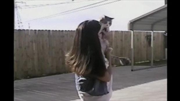 คลิป แมวชอบตบ จริงมั้ย?