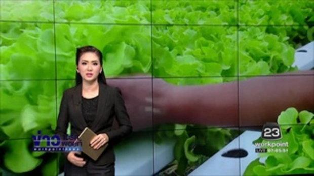 ข่าวแก้จน ปลูกผักไฮโดรโปนิกหาเงิน