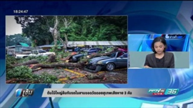 ต้นไม้ใหญ่ล้มทับรถในลานจอดวัดดอยสุเทพเสียหาย 3 คัน - เข้มข่าวค่ำ