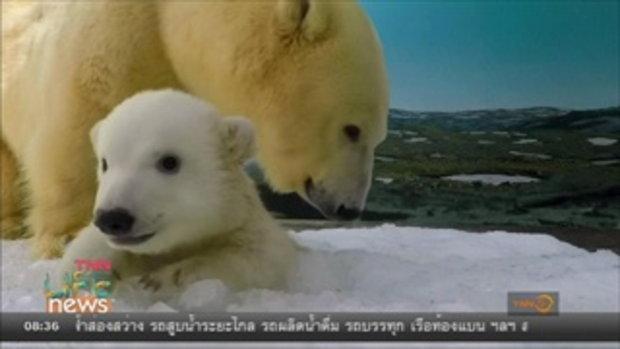 เผยภาพความน่ารักของหมีขาวขั้วโลก