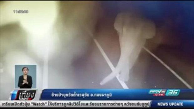 ช้างป่าบุกถ้ำเวฬุวัน อ.ทองผาภูมิ - เที่ยงทันข่าว