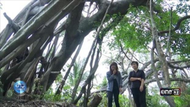 สวนป่าชุมชนเมือง