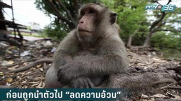 """""""ลิงอ้วน"""" บางขุนเทียน ถึงเวลากลับ""""บ้าน"""""""