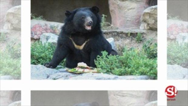 Safari Park กาญจนบุรี สวนสัตว์เปิดแห่งใหม่สัมผัสเจ้าสัตว์น่ารักได้แบบใกล้ชิด!!