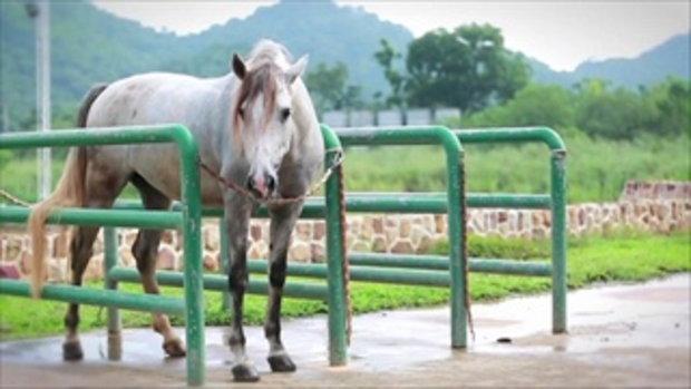 รอบเมืองไทย Variety : นอนคอกม้า อยู่กับคนรักม้า