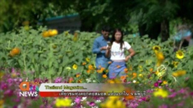 เที่ยวชมทุ่งดอกคอสมอส แห่งแรกใน จ.ลพบุรี