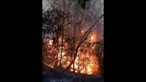 นรกบนดิน!! 'ไฟป่า' ที่ทั้งร้อนและอันตราย (wildfire)