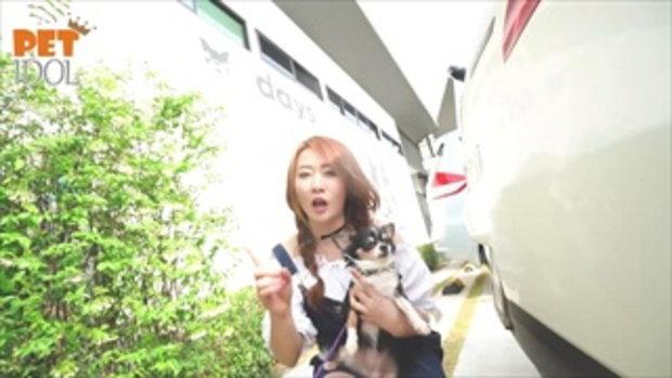 Pet Idol EP.2 หมาทำกาย!! ยังไงให้เป็นหมาที่แข็งแรง!! (Mini)