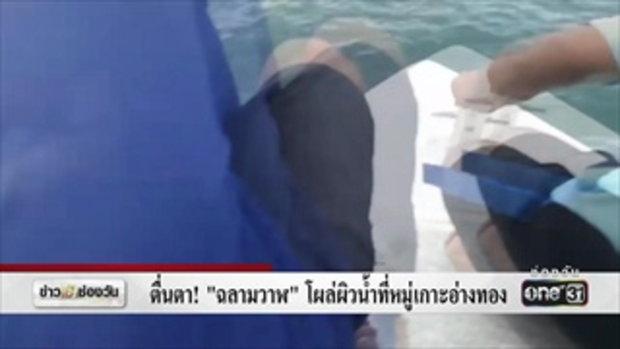 ตื่นตา! 'ฉลามวาฬ' โผล่ผิวน้ำที่หมู่เกาะอ่างทอง | ข่าวช่องวัน | ช่อง one31