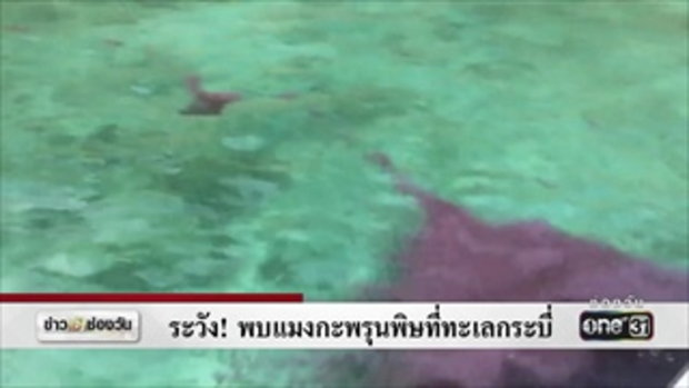 ระวัง! พบแมงกะพรุนพิษที่ทะเลกระบี่ | ข่าวช่องวัน | ช่อง one31