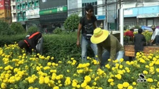 Sakorn News : เทศบาลตำบลด่านสำโรง ปลูกดอกดาวเรือง