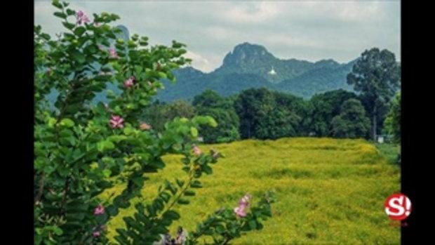 วันเดย์ทริป ชมทุ่งคอสมอสกลางหุบเขาจีนแล จังหวัดลพบุรี