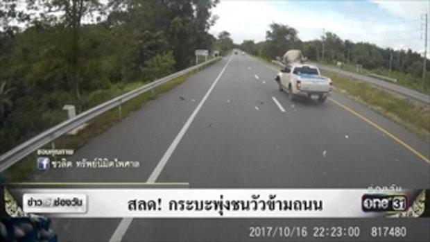 สลด! กระบะพุ่งชนวัวข้ามถนน | ข่าวช่องวัน | ช่อง one31