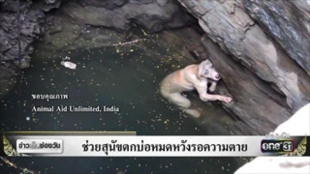 ช่วยสุนัขตกบ่อหมดหวังรอความตาย | ข่าวช่องวัน | ช่อง one31