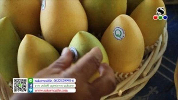 Sakorn News : สกู๊ปมะม่วงปลอดสารพิษ