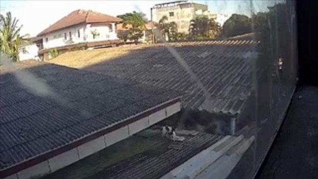 เผยคลิปให้อาหารแมวบนหลังคาบ้านคนอื่น ถาม แบบนี้ได้บุญจริงหรือ