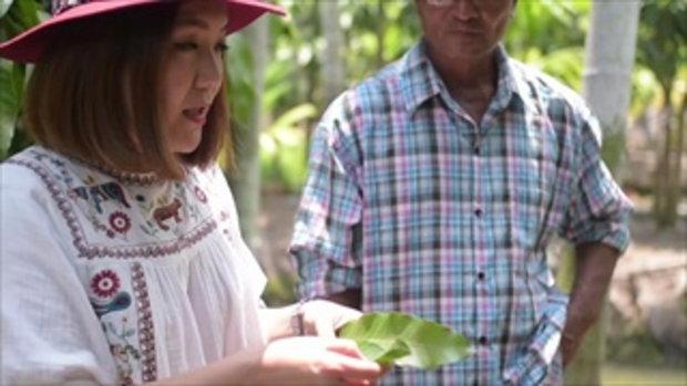 กบนอกกะลา : Mango season เปรี้ยว หวาน มัน กรอบ ช่วงที่ 3/4 (17 พ.ค.61)