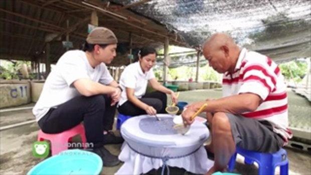 กบนอกกะลา : ปลากัด ปลาบ้านนา มูลค่าไฮโซ ช่วงที่ 4/4 (24 พ.ค.61)