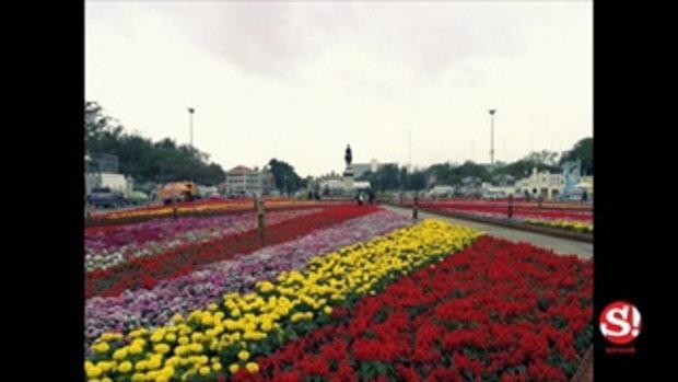 สุดยิ่งใหญ่สวนดอกไม้พระลานพระราชวังดุสิต