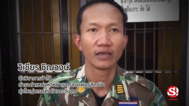 รู้จัก วิเชียร ชิณวงษ์ เทพารักษ์แห่งป่าไทย