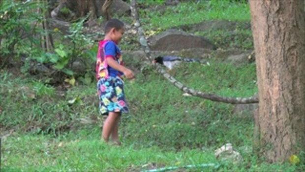 คู่ซี้ต่างสายพันธุ์ นกสาลิกาดง เพื่อนเล่นกับเด็กชายที่ อช.ออบหลวง