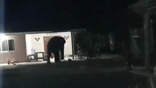 ช้างป่าบุกเข้าบ้าน